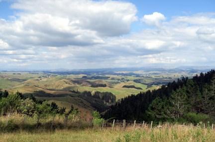 Sur la route entre Martinborough et le Tongariro National Park