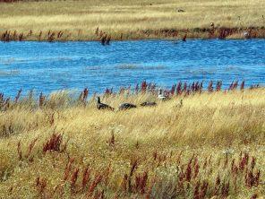 """Dans la réserve écologique municipale au bord du lac """"Argentine"""" (Lago Argentino)"""