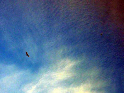 Les condors ne sont pas très loin ! Torres Del Paine
