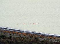 Des Flamands roses au Parc National Torres Del Paine