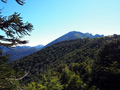 Les arbres couchés par le vent sur une colline