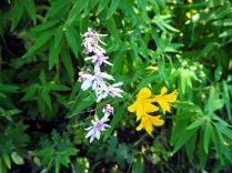 Fleurs au Cerro San Sebastian