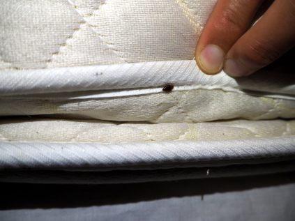 Une punaise de lit, bien cachée dans les replis du matelas