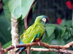"""Péruche au """"Parque das aves"""""""