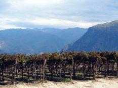 Les vignobles de Cafayate, avec au loin les montagnes