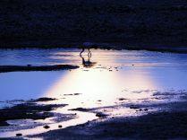 Laguna Chaxa de la Reserva de los flamencos