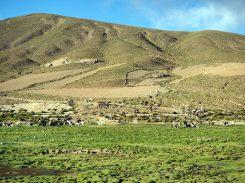 Troupeaux de lamas, Sud Lipez