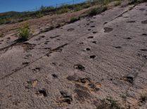 Traces fossilisées de dinosaures au parc de Toro Toro