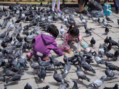 Deux enfants nourrissent les pigeons, La Paz