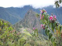 Aperçu du site du Machu Picchu depuis la végétation luxuriante de la Montana