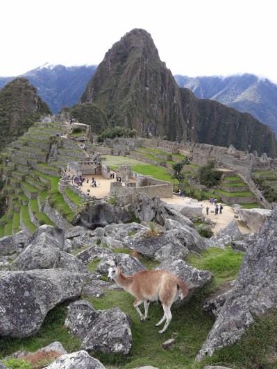 La traditionnelle photo du Machu Picchu avec un Llama