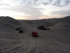 Les nombreux buggy autour de l'oasis