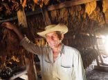 Un paysan dans son séchoir à tabac