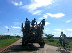 Sur la route vers Cayo Coco
