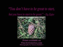 """""""You don't have to be great to start, but you have to start to be great."""" – Zig Ziglar. One of the quotes which is included in the book """"On Becoming a Lemonade Maker"""" by Tamara Kulish."""