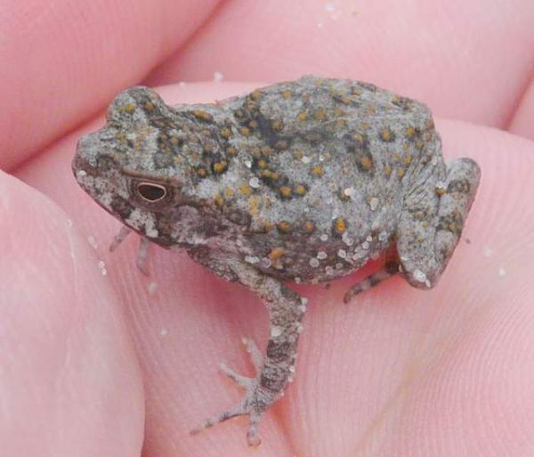 Toad?