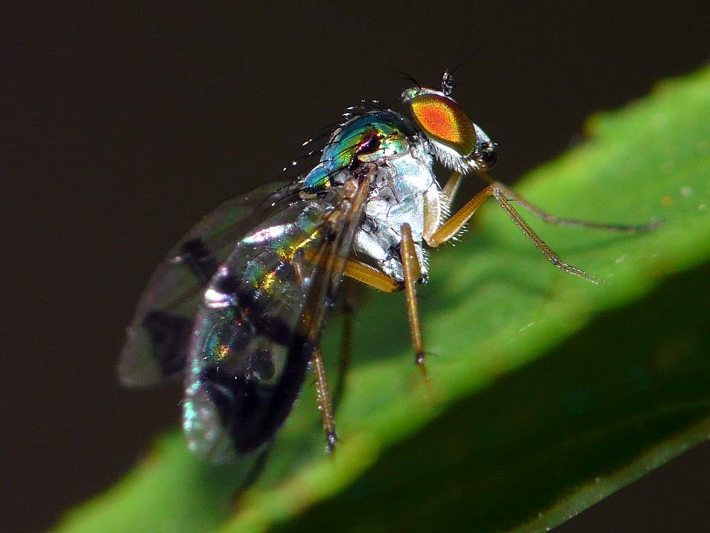 Magnificent Neon Fly