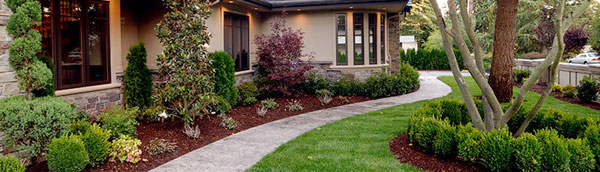 Our Process | Tree and Shrub Expert Service