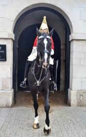 Horse Guard