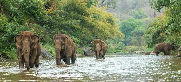 elefant_nature_park