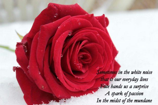 rose-1201291_1920 (1)