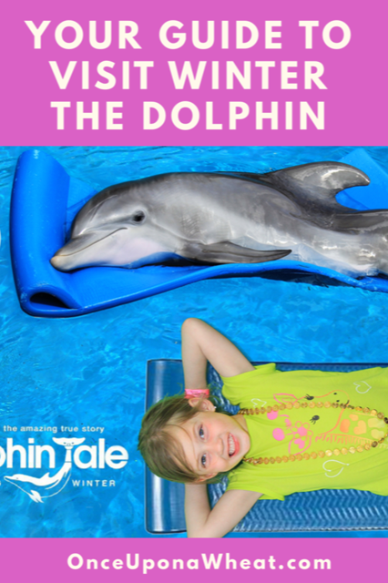 Visit Winter the Dolphin in Clearwater, Florida