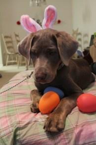 Easter Koda