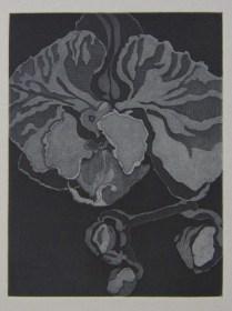 """""""Phalaenopsis I,"""" 2017 etching"""