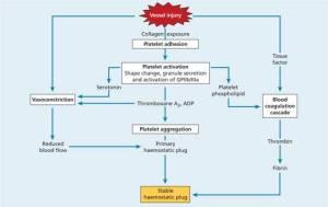 24: Platelets, blood coagulation and haemostasis | Oncohema Key