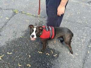 Rosey Service Dog