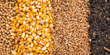 Grains, the biggest possible export item from the United States to Cuba for now. Image: Robobank.com