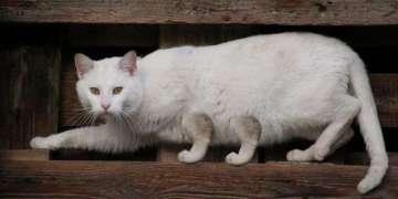 Georffrei Silvestre, el Gato. Foto: Perfil de Facebook de Georffrei Silvestre.