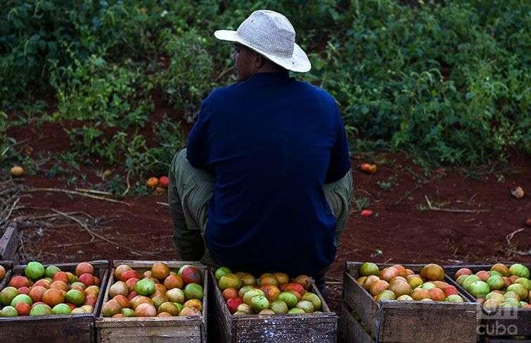 Campos de Cuba /Fotos: Roby Gallego