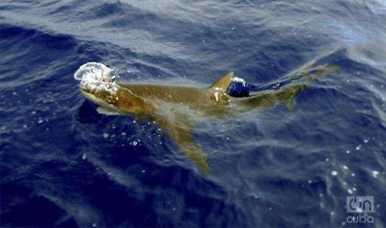 tiburones-01