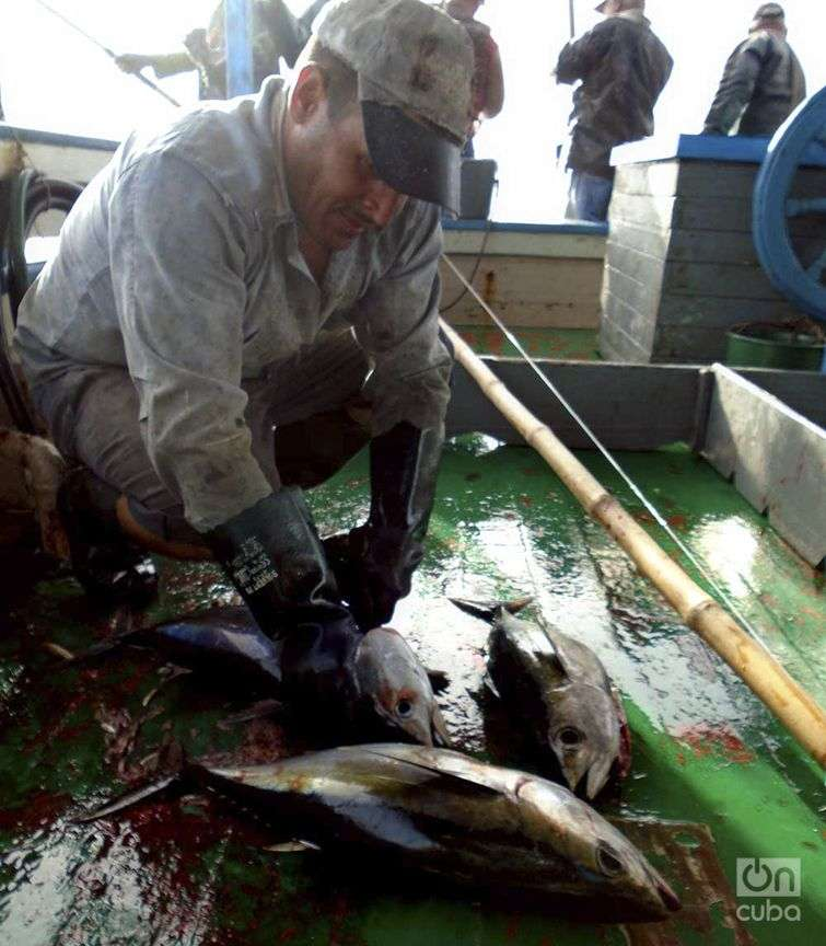 tiburones-06