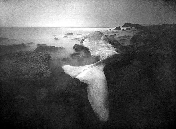 Exposición del artista Morten Loberg (Noruega) en la Fototeca de Cuba.