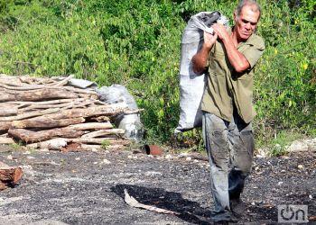 Carbonero cubano. Foto: Luis Gabriel.
