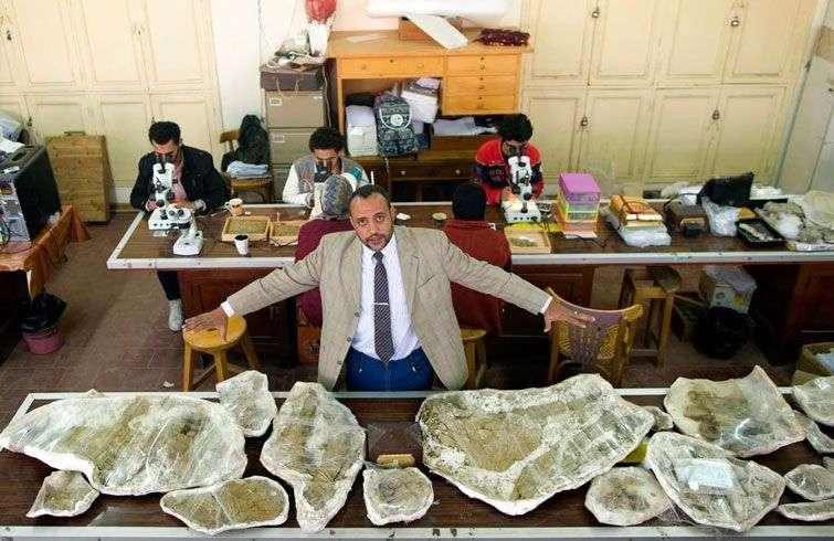 Hesham Sallam, responsable del Centro de Paleontología de Vertebrados en la Universidad de Mansoura, muestra huesos de un dinosaurio del Cretácico en Mansoura, Egipto. Foto: Amr Nabil / AP.