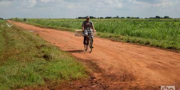 Empresa estatal agrícola Cítricos Ceiba, en la provincia cubana de Artemisa. Foto: Otmaro Rodríguez.
