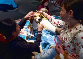 """Estudiantes del Theodore T. Alexander Science Center School practican cepillar los dientes de un perro durante un recorrido previo a la inauguración de la exposición """"Dogs! A Science Tail"""" en el California Science Center en Los Angeles en una fotografía del 12 de marzo de 2019. La muestra que se inaugura el sábado examina la relación entre los perros y los humanos y explora por qué las dos especies piensan tan parecido y se llevan tan bien. Foto: Richard Vogel / AP."""