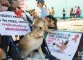 Mili en el Parque El Quijote, antes de la partida de la marcha contra el maltrato animal, el 7 de abril de 2019 en La Habana. Foto: Otmaro Rodríguez.