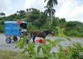 En Baracoa. Foto: Otmaro Rodríguez.