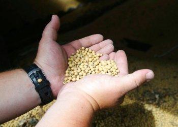 Un agricultor estadounidense muestra un puñado de soya, producto al gobierno chino eliminará el aumento arancelario previsto como parte de su guerra comercial con EE.UU. Foto: Jim Mone / AP / Archivo.