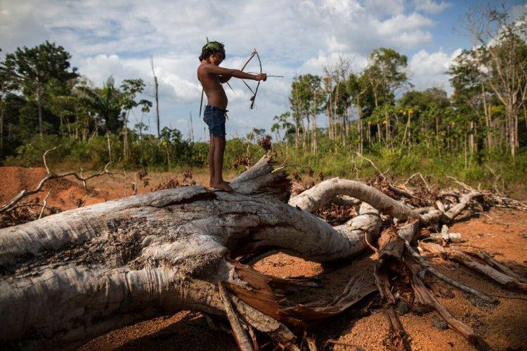 """En esta imagen del 2 de septiembre de 2019, Emilia Tembé, de 7 años, tensa un arco de juguete hecho a mano con palos y hojas, de pie sobre un árbol caído en el poblado de Ka 'a kyr, en el estado brasileño de Para. """"Esta zona era un bosque original. Esto era bosque primario. Pero llegó el fuego y despejó la tierra"""", dijo Emidio Tembé, abuelo de Emilia y el jefe de Ka' a kyr que le puso nombre a la aldea. (AP Foto/Rodrigo Abd)"""