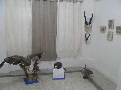 Algunas piezas del Museo Nacional de la Medicina Veterinaria de Cuba. Foto: www.tribuna.cu