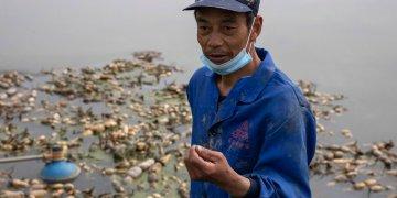 Jiang Yuewu habla sobre su cosecha de raíces de loto en el distrito de Huangpi, en la provincia central china de Wuhan. Foto: Ng Han Guan/AP.