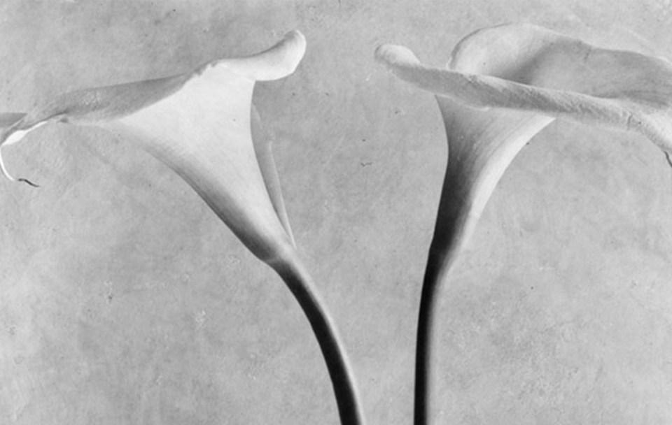 Exposición de Tina Modotti