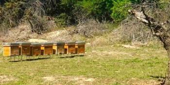 Se instalan siete colmeneros de abejas en el Parque Agrario