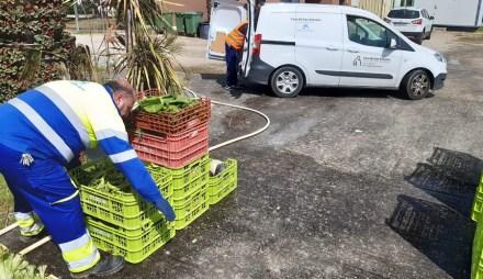 Reparto de alimentos procedentes de huertos municipales que trabajan los mayores