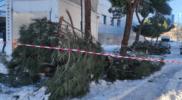 El Ayuntamiento revisa todo el arbolado de la ciudad tras el paso del temporal